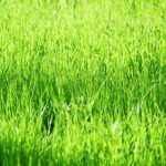 meaning of green