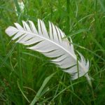 small feather