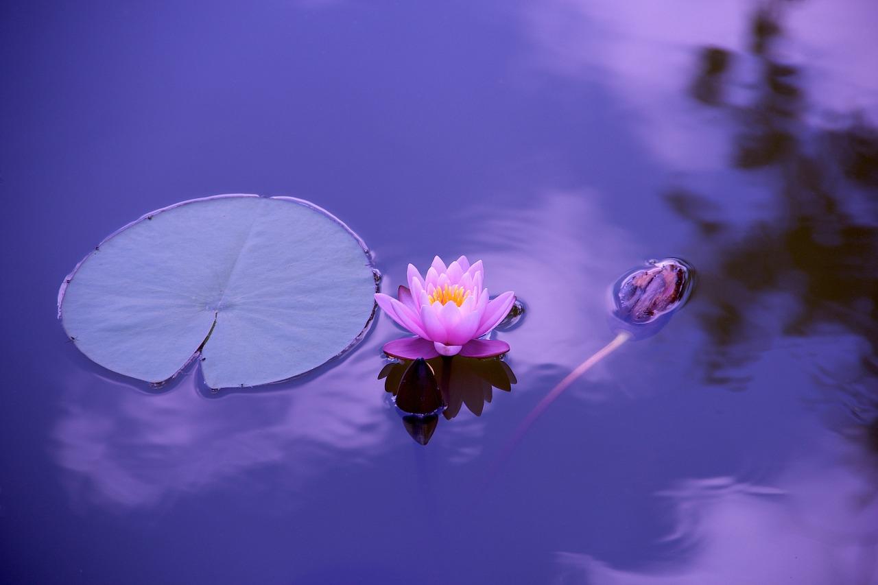 abundant energy harmonious life